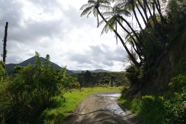 Te Araroa Trail to Raetea forest
